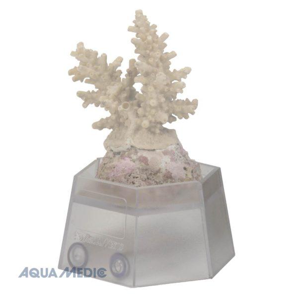 Coral holder