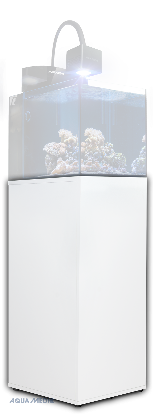 Blenny Stand White